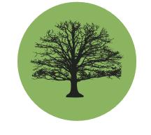 Capture arbre.PNG